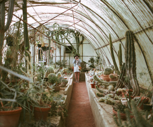 cactus, girl, and greenhouse image