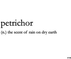 rain and petrichor image