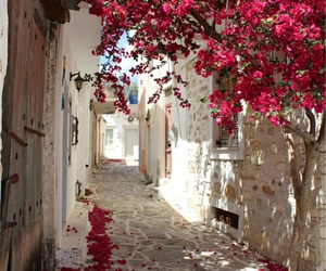 travel, flowers, and city image