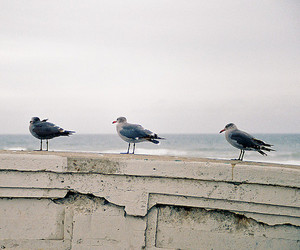 birds, photography, and sea image