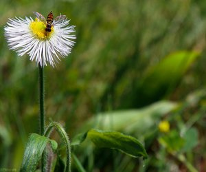 bee, summer, and flower image
