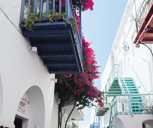 flowers, Greece, and mykonos image