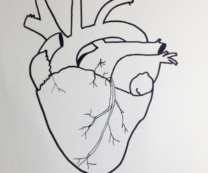 brasil, drawing, and heart image
