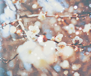 flowers, winter, and japan image