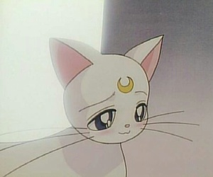 cat, sailor moon, and white image