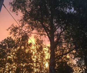trees sunset pink yellow image
