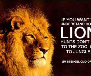 animals, lion, and vegan image