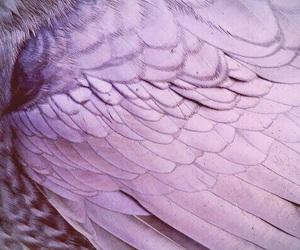 purple, bird, and wings image