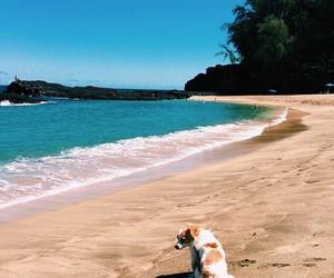 beach, dog, and summer image