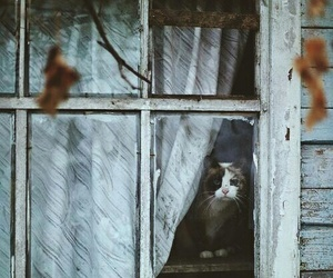 cat, window, and autumn image