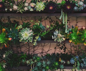 plants, green, and flowers image