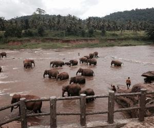 beautiful, elephants, and river image