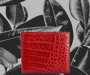 crocodile skin wallet and crocodile skin cadholde image