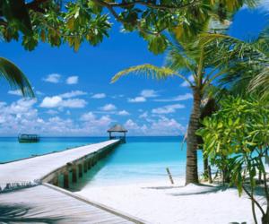beach, palm, and sand image