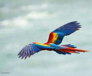 animals, bird, and Flying image