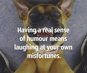 humor, smile, and quotes image