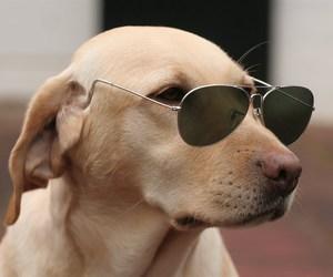 dog, glasses, and pet image