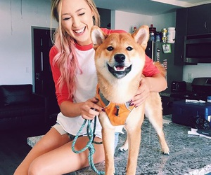 dog, laurdiy, and youtuber image