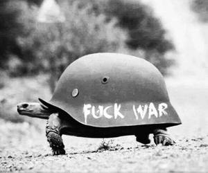 peace, turtle, and stop war image