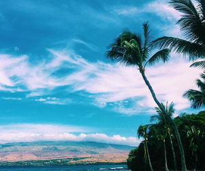 beautiful, place, and palm image