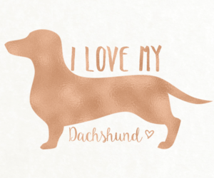 dachshund, iphone, and wallpaper image