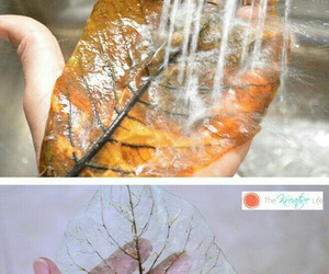 diy and leaves image