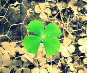 clover, green, and luck image