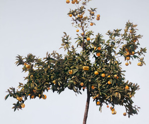 fruit and tree image