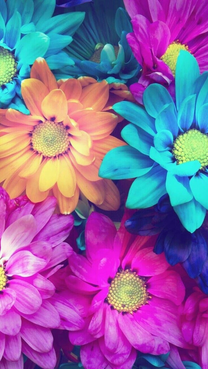 Wallpapers Background Flowers Colors Pink Blue Orange