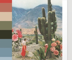 cacti, cactus, and color image