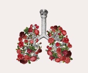 flowers, lungs, and rose image