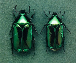 bug, green, and nature image