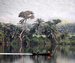 jungle and river image