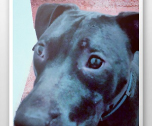 dog, dogs, and portrait image