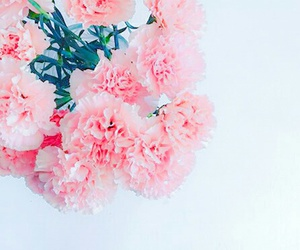 flowers and white wall image