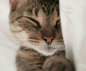 animal, sleeping, and sweet image