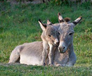 cute animals, donkey, and baby animals image