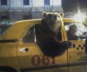 bear, funny, and animal image