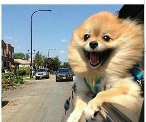 funny, animal, and dog image