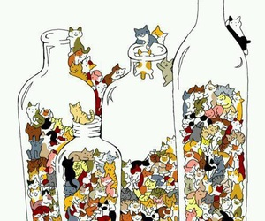 cat, bottle, and kitten image