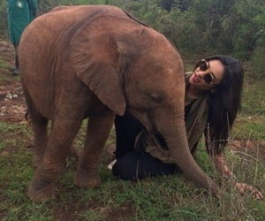 elephant, shay mitchell, and pretty little liars image