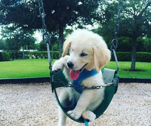 dog, play, and puppy image