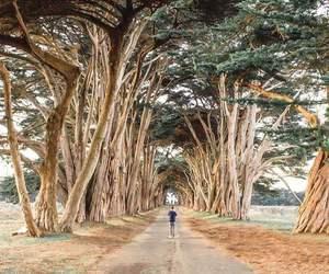 amazing, nature, and photography image