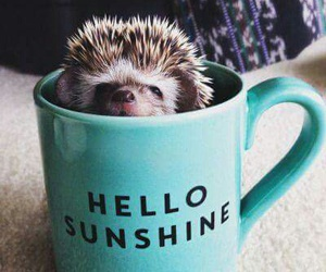 hedgehog, adorable, and animal image