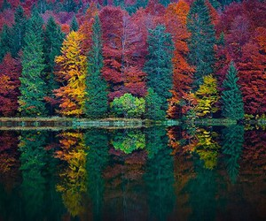 tree, autumn, and forest image