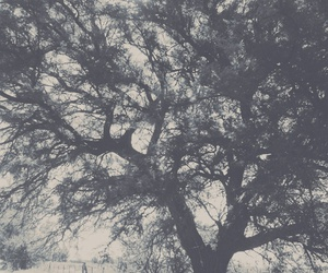 grey, nature, and tree image