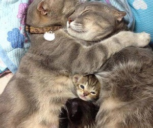 cat, family, and animal image