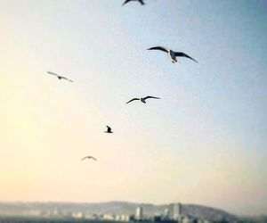 bird, clear sky, and Flying image