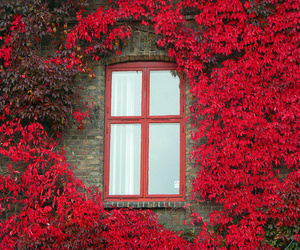 window, red, and flowers image