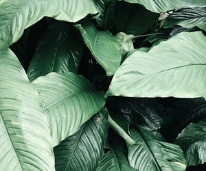 green, voguology, and plant image